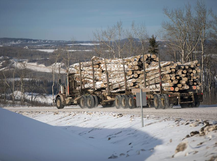 Merchantable timber being transported to local mills (January 2018)