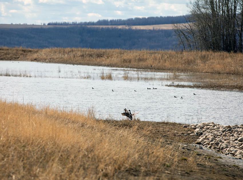 A variety of birds using the Golata Creek wetlands. (April 2021)