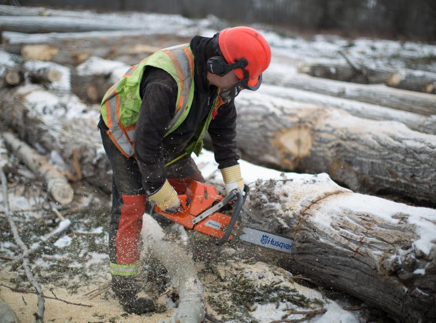 Worker cutting logs for future transport to local mills. (March 2017)